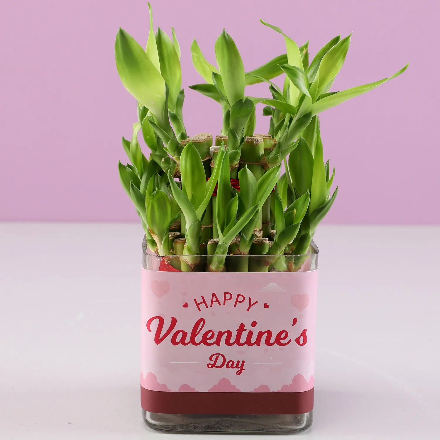 Bamboo Plant for valentine's day gift